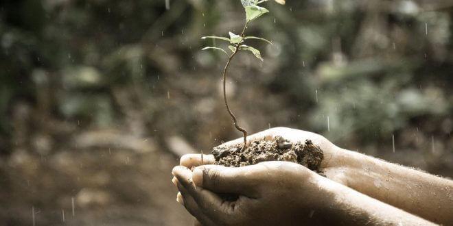 Regnvandsanlæg – Få mest muligt ud af dit regnvand