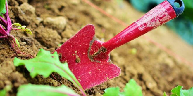 Hvordan bliver man jordbrugsteknolog?
